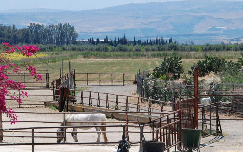 fattoria_didattica_per_famiglie_fattoria_jannarella